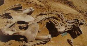 кладбище мамонтов,древние мамонты
