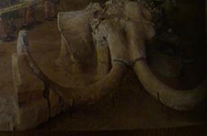 древние мамонты