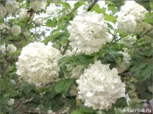 весна в Сербии