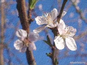цветение садов