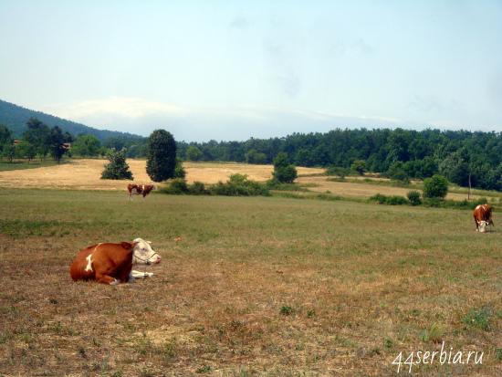 Фотографии Сербии: из окна машины