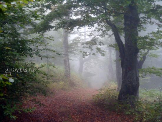 Стара Планина леса