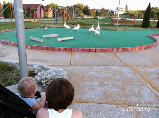 Заечар: площадка для мини-гольфа