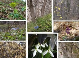 Начало весны в Сербии