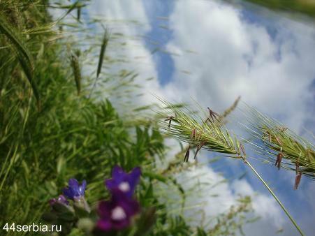 Май в Сербии