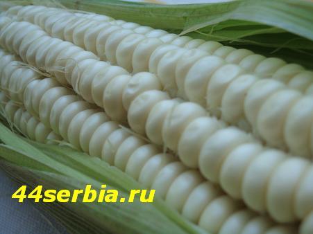 Сербская кухня: кукуруза