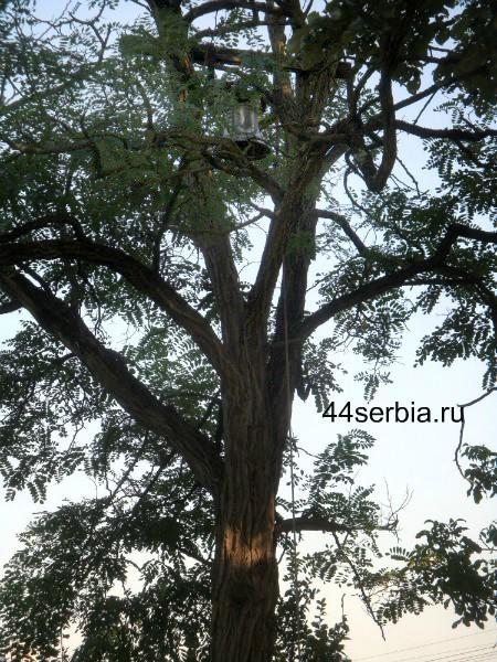 Колокол на дереве