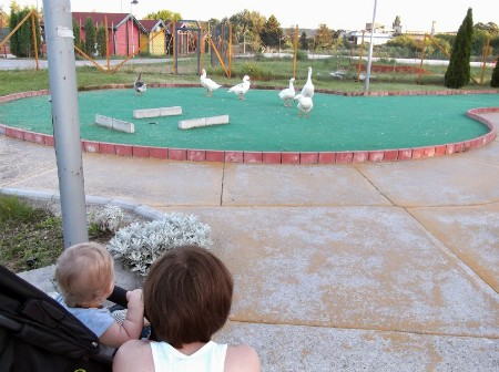 Гуси на гольф-площадке