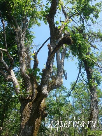 Живописное дерево