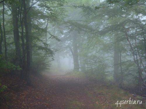 Стара Планина дорога