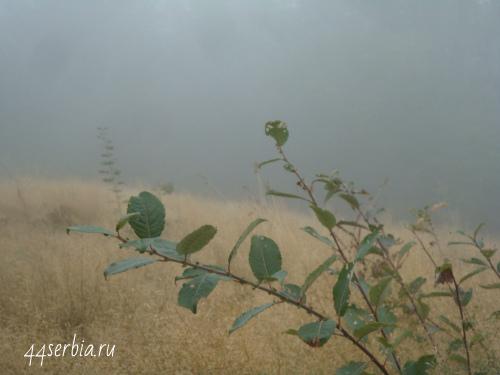 Потеряться в тумане