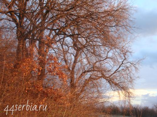 Начало декабря в Сербии