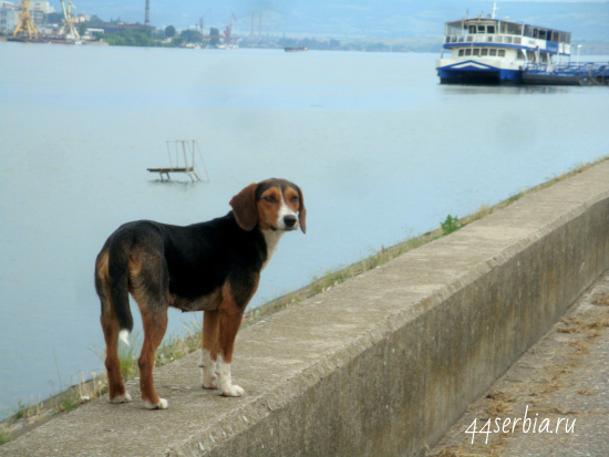 Дунай, Сербия - город Кладово, на другом берегу - Румыния, город Турну Северин