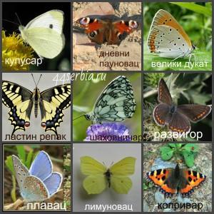 Названия бабочек на сербском языке