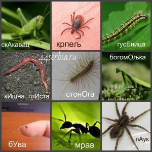 Лексика на сербском