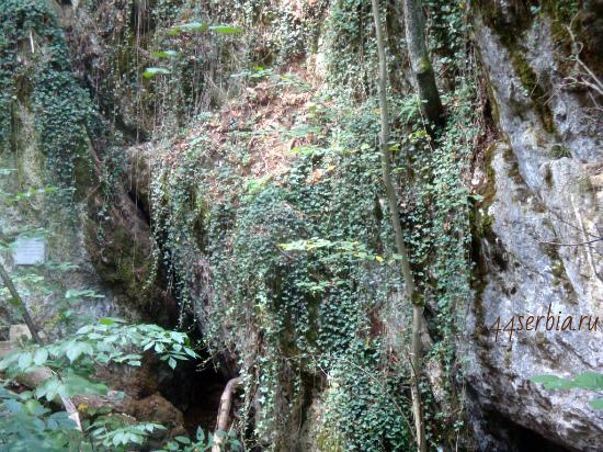 Джунгли Восточной Сербии