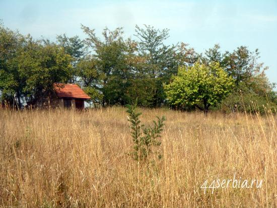 Дачный домик в Сербии
