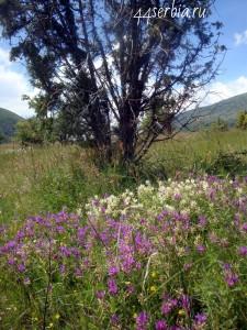 Растения Сербии