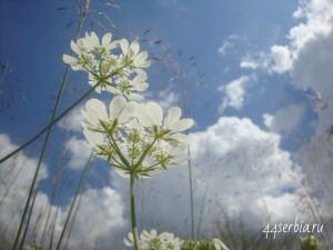 Цветы и облака