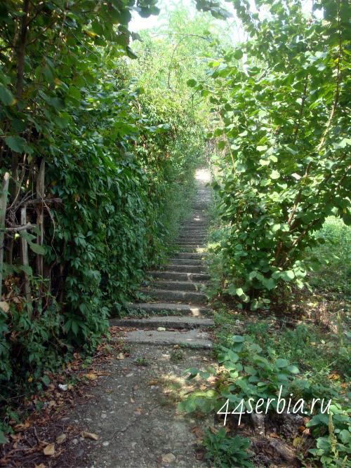 Лестница куда