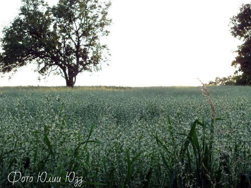 Пейзаж по пути в Николичево