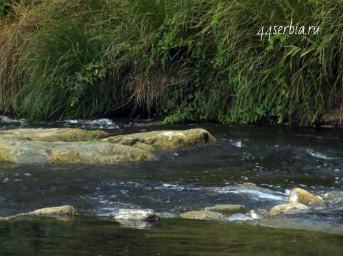 Река Тимок