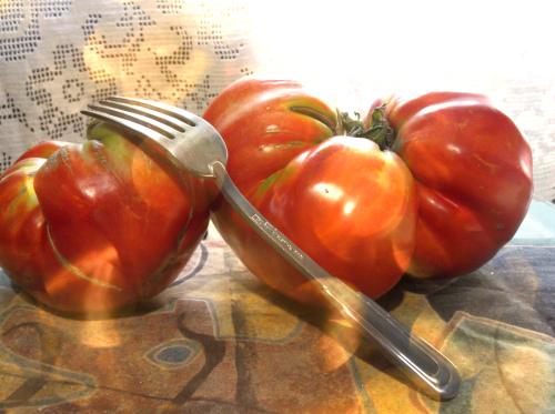 Сербия отдых с самостоятельным питанием