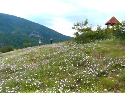 Сокобаня-Поповица