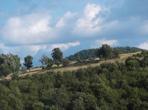 Красивая поляна в Восточной Сербии