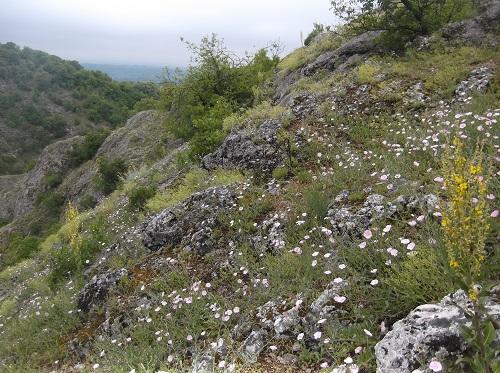 Природные достопримечательности Сербии