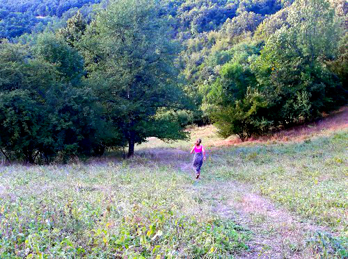 Сербия леса