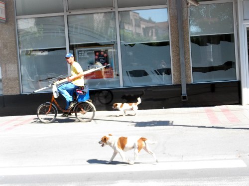 Велосипедист с собачками