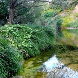 На реке Тимок