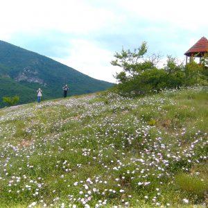 Сокобаня, Поповица