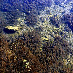 Рыбы намелководье