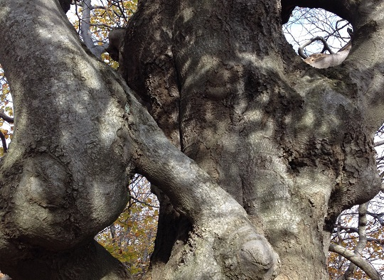 Кривые_деревья_фото