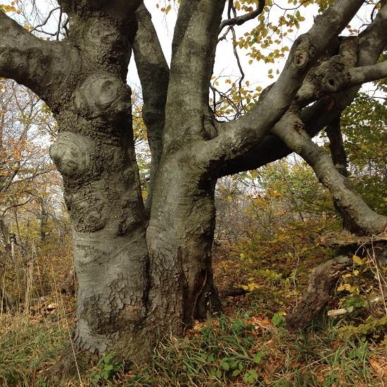 Кривые деревья фото