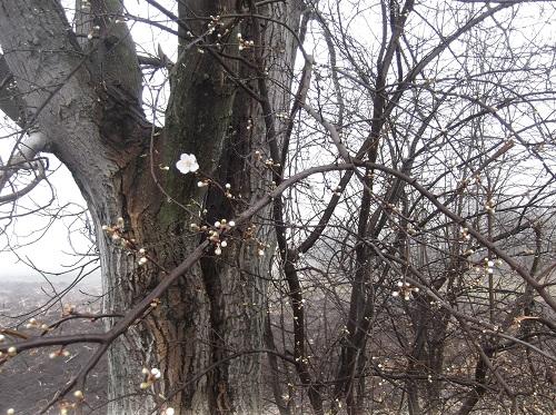 Весенний_лес_фото