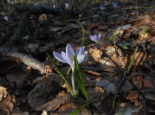 Весенний_лес_фотографии
